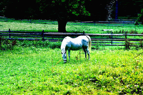 Chestnut Hill Photograph - Chestnut Hill Horse by Bill Cannon