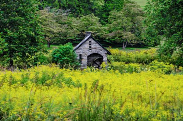 Chestnut Hill Photograph - Chestnut Hill - Morris Arboretum by Bill Cannon