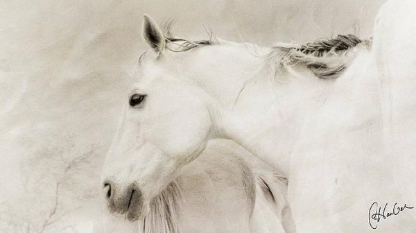 Cheval Blanc Art Print