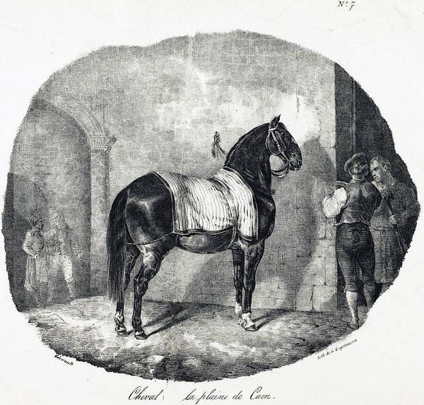 Drawing - Cheval De La Plaine De Caen by Theodore Gericault