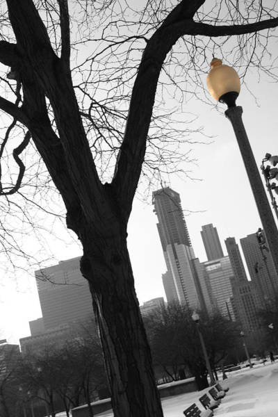 Photograph - Chicago Light Post I by Dylan Punke