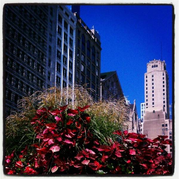 Photograph - Chicago Scene by Tammy Winand