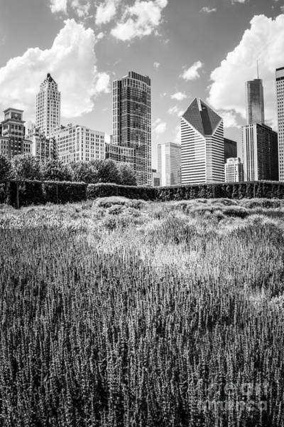 Chicago Black White Wall Art - Photograph - Chicago Skyline Lurie Garden Black And White Photo by Paul Velgos