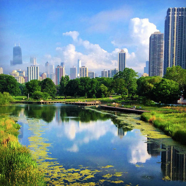 Photograph - Chicago Skyline, Water Reflection, Lincoln Park by Patrick Malon