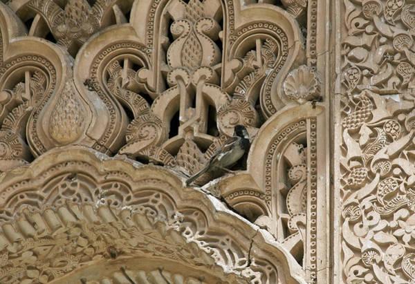 Photograph - Chickadee, Alhambra by David Kleinsasser
