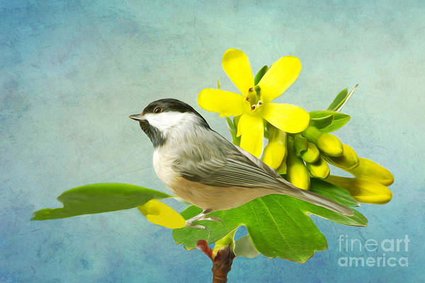 Tit Photograph - Chickadee And Flowers by Laura D Young