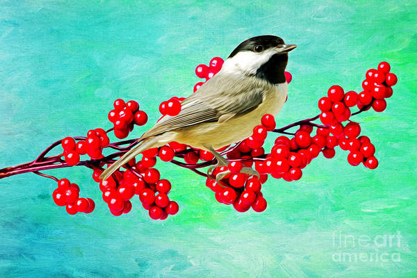 Chickadees Photograph - Chickadee And Winterberry by Laura D Young