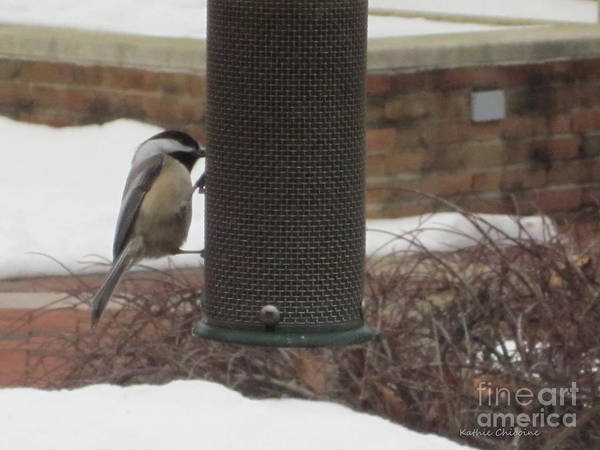 Photograph - Chickadee At Feeder by Kathie Chicoine