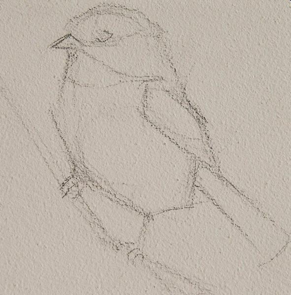 Drawing - Chickadee Drawing by Jani Freimann