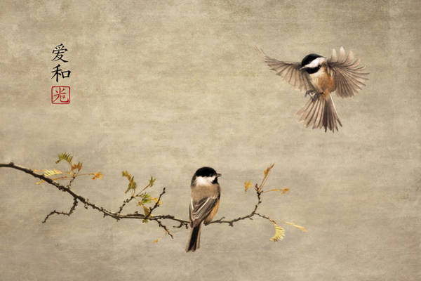 Photograph - Chickadee Encounter II by Leda Robertson