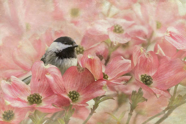 Wall Art - Photograph - Chickadee In The Dogwood by Angie Vogel