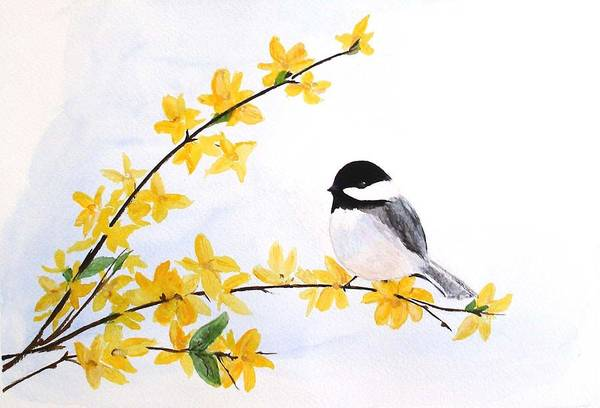 Forsythia Painting - Chickadee Spring  by Sibby S