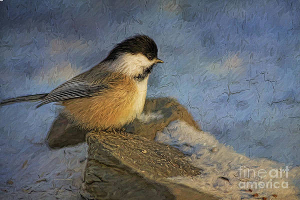 Painting - Chickadee Winter Perch by Deborah Benoit