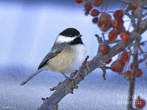 Chickadees Photograph - Chickadee With Craquelure by Deborah Benoit