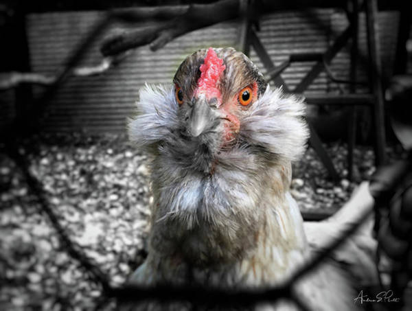Photograph - Chicken Coop Glare by Andrea Platt