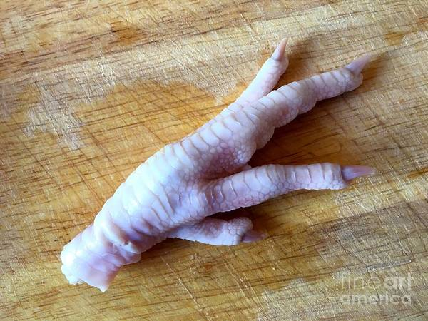 Photograph - Chicken Foot by Henrik Lehnerer