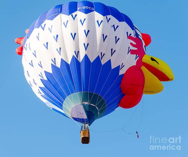 Photograph - Chicken Hot Air Balloon by Colin Rayner
