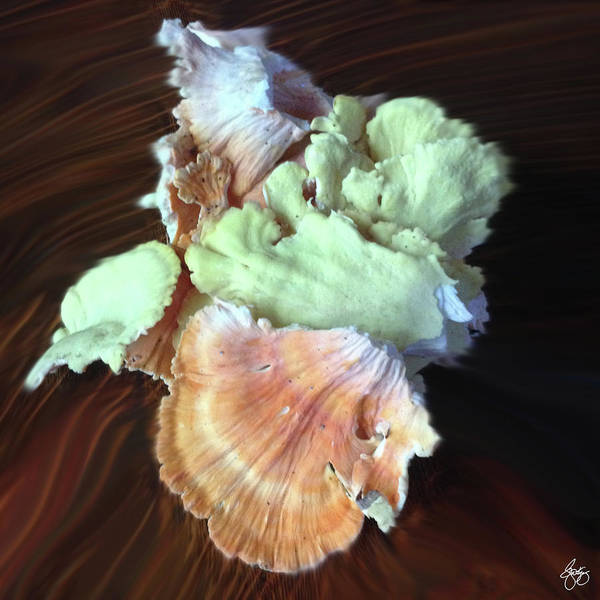 Photograph - Chicken Of The Woods In Pastel by Wayne King