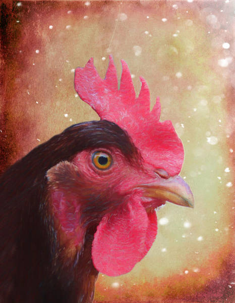 Painting - Chicken Portrait - Painting by Ericamaxine Price