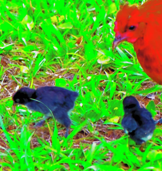 Photograph - Chicks First Worm by Gina O'Brien