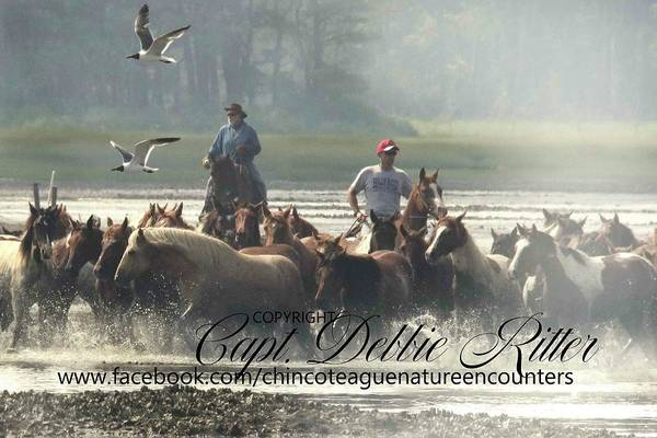 Photograph - Chief In The Lead by Captain Debbie Ritter