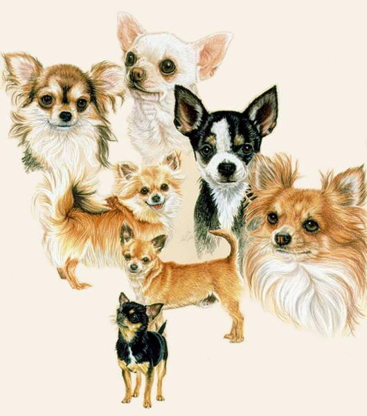 Drawing - Chihuahua by Barbara Keith