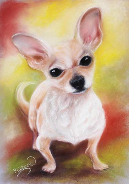 Wall Art - Drawing - Chihuahua No. 2 by Patricia Lintner