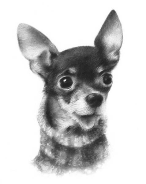 Pup Drawing - Chihuahua Pup by Natasha Denger