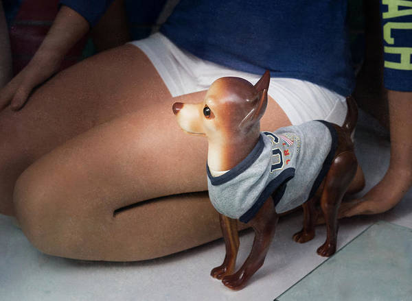 Photograph - Chihuahua by Steven Greenbaum