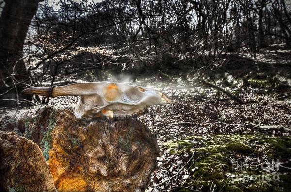Deer Skull Digital Art - Child Of The Forest by Nigel Bangert