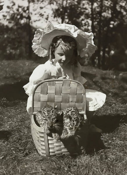 Wall Art - Photograph - Child With Leopards 1907 by Daniel Hagerman