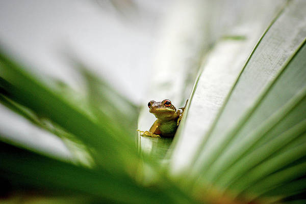 Frog Photograph - Chillin by Dan Jordan