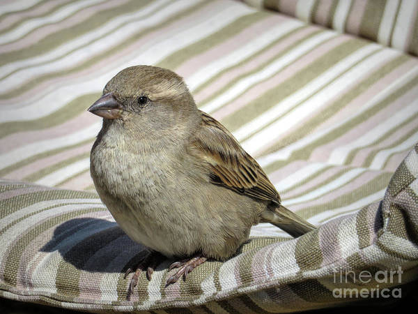 Crossbill Photograph - Chilling In Majorca by Elisabeth Lucas