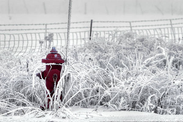 Photograph - Chilly Hydrant by David Andersen
