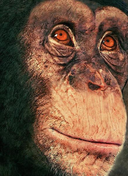Gorilla Painting - Chimp by Jack Zulli
