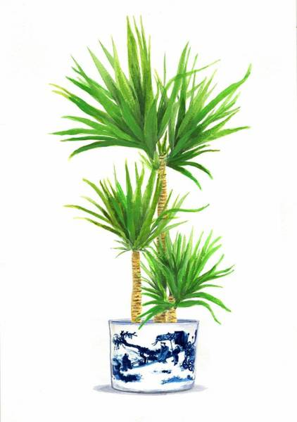 Ming Tree Painting - China Blue With Palm Tree by Green Palace