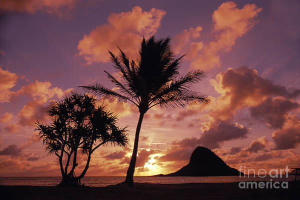 Mokolii Photograph - Chinamans Hat At Sunset by Greg Vaughn - Printscapes