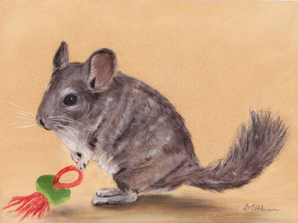 Drawing - Chinchilla by Anastasiya Malakhova