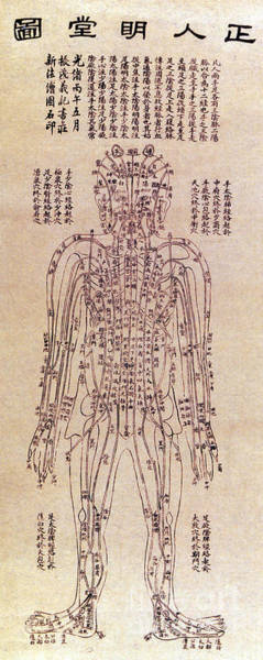 Wall Art - Photograph - Chinese Acupuncture Chart by Science Source