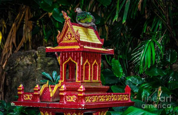 Photograph - Chinese Bird House by Gary Keesler