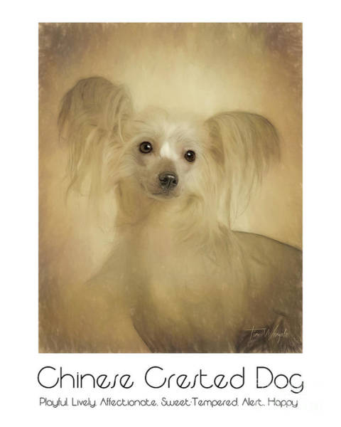 Digital Art - Chinese Crested Dog Poster by Tim Wemple
