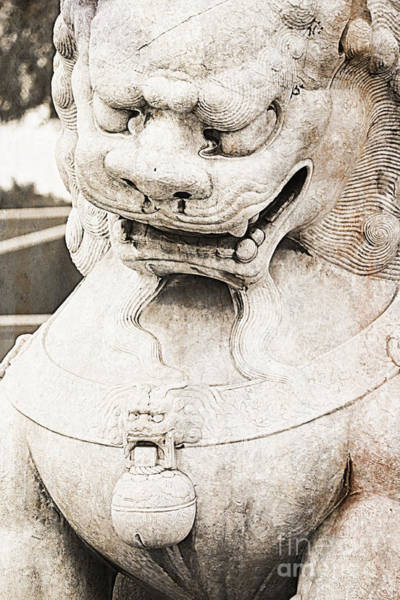Photograph - Chinese Guardian Lion by Carol Groenen