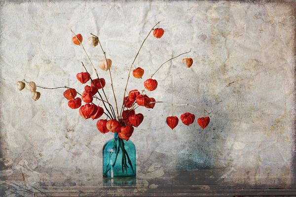 Pod Wall Art - Photograph - Chinese Lanterns by Carol Leigh