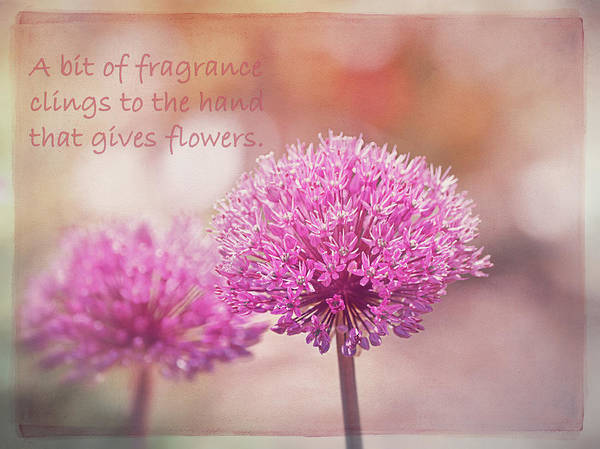 Proverb Photograph - Chinese Proverb  by Maria Angelica Maira