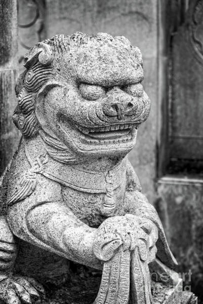 Lion Statue Wall Art - Photograph - Chinese Stone Lion by Delphimages Photo Creations
