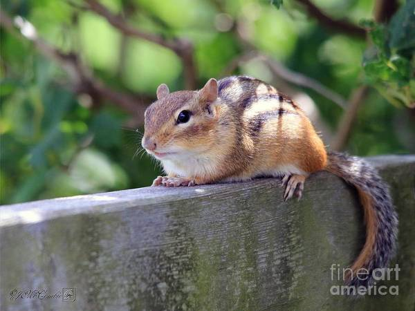 Munk Wall Art - Photograph - Chipmunk Chillin' On The Railin' by J McCombie