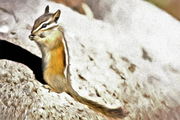 Wall Art - Photograph - Chipmunk Munch by Lana Trussell