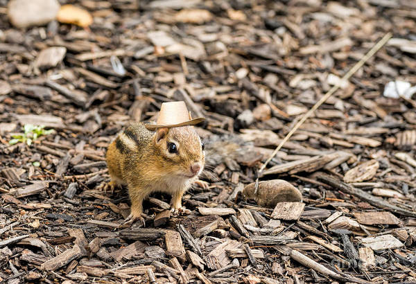 Photograph - Chipmunk With A Straw Hat by Les Palenik