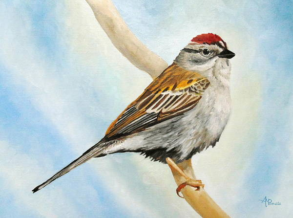 Painting - Chipping Sparrow by Angeles M Pomata