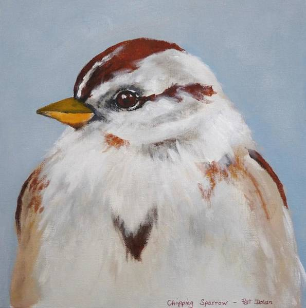 Painting - Chipping Sparrow by Pat Dolan